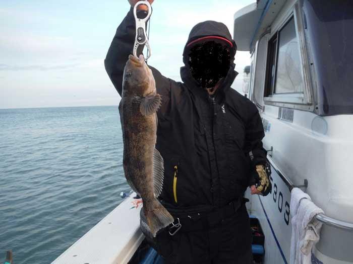 苫小牧沖のアイナメ