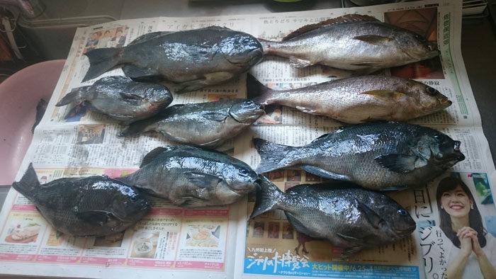 平島の堤防の釣果情報