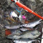 猛暑でもグレの数釣りが楽しめる/知夫里島裏磯(島根県 隠岐の島 知夫里)