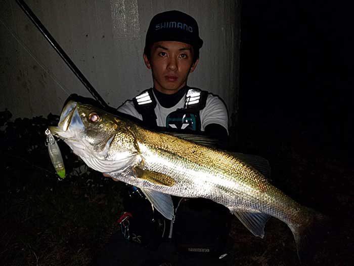 ハラちゃん シーバス 太田川放水路