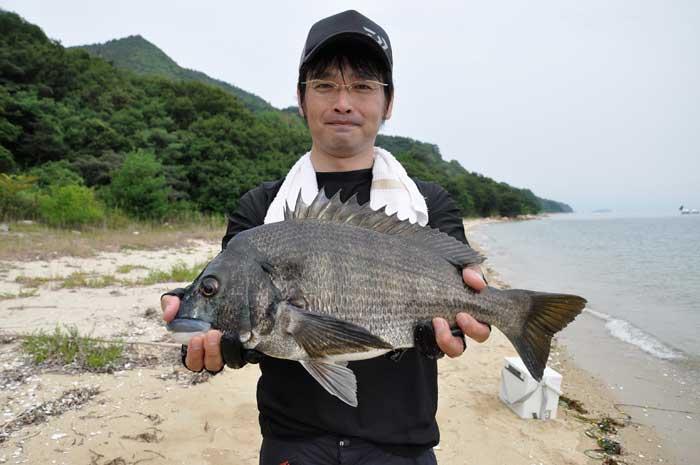 良型チヌ 渚釣り
