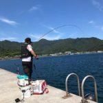 波止フカセで良型チヌなど多数ヒット/護江の漁港(大分県佐伯市)