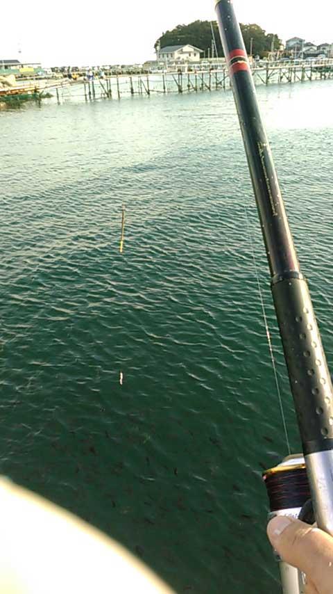 小島養魚場 釣り竿