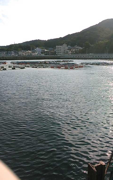 小島養魚場