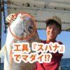 工具の『スパナ』でマダイをキャッチ!/玄界灘(福岡県福岡市)