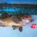 北海道初釣りは沖五目&ボートロック/苫小牧沖及び沖堤防(北海道苫小牧市)