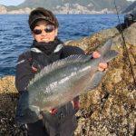 潮の中で良型グレをキャッチ/由良半島・沖釣2番&地釣1番(愛媛県愛南町)