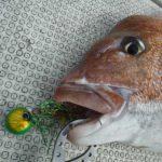 タイラバで良型真鯛ヒット/玄界灘(長崎県壱岐・福岡出船)