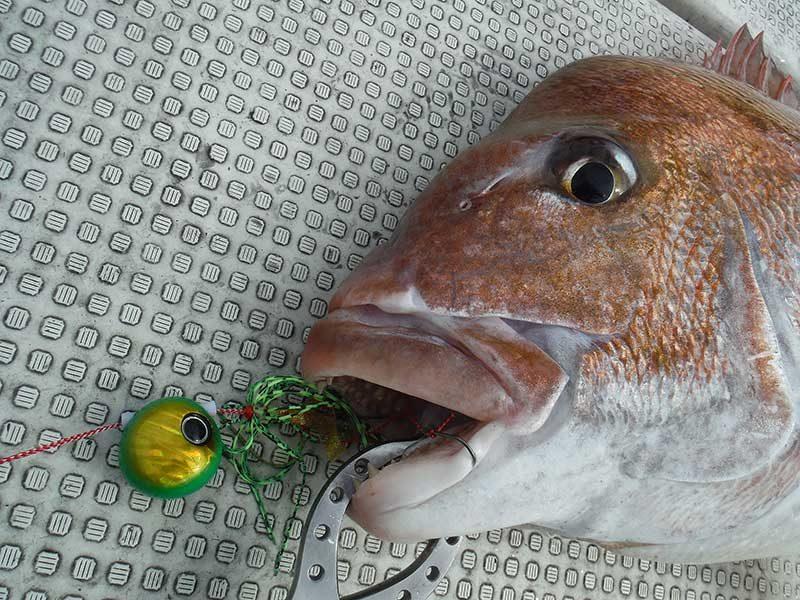タイラバと真鯛