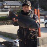 潮の中で良型グレをキャッチ/矢が浜 ロクタン(愛媛県宇和島市)
