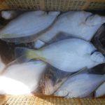 船釣りでマガレイ、カジカヒット/浜厚真沖(苫小牧市)