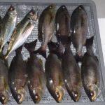 イサキ&アジのコマセ釣り/深島周辺など(佐伯市)