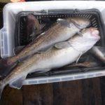 タラ釣り&タラジグの使い方/厚岸沖(北海道釧路市)