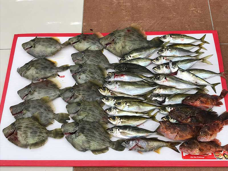 アジ カワハギ 釣果