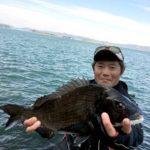 フカセ釣りで42cmのチヌ/小与島北東角(香川県坂出市/出船:下津井港)