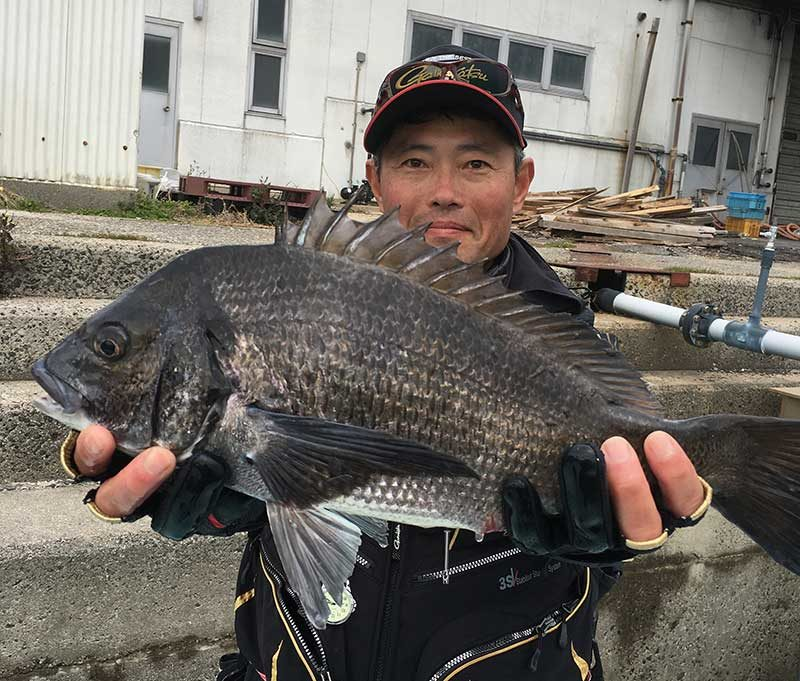 下津井のチヌ,本島
