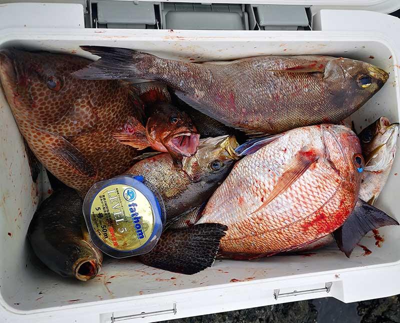 御五神島での釣果。イサキやマダイに混じってオオモンハタもヒットした